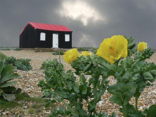 Black hut Rye jpeg