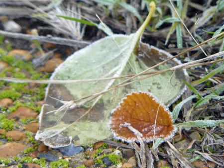2010-12-06_6829web
